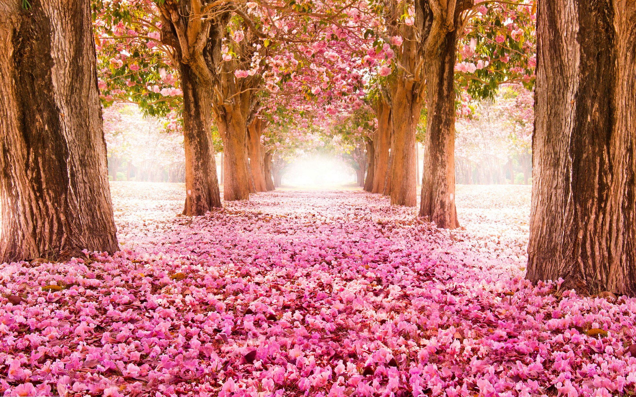 بهار فصل آلرژی / تغذیه در فصل بهار چگونه باشد؟ / روز بیست و سوم شکرگزاری